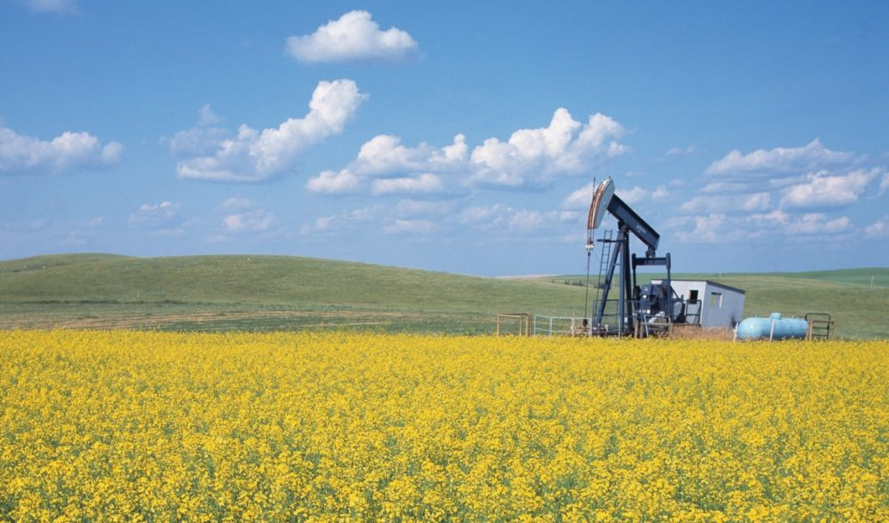 Alberta oil well in canola field